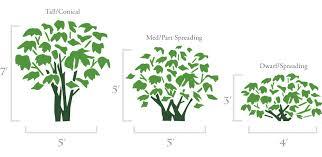peony garden planning designing with peonies