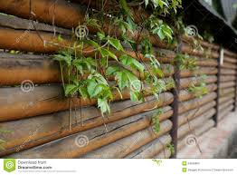 fence planks with climbing plants stock photo image 54658806