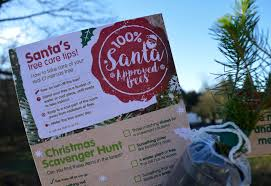 why you should choose a real sustainable christmas tree from a