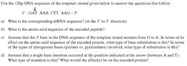 use the 12bp dna sequence of the template strand g chegg com