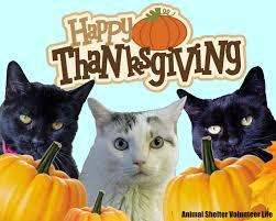 animal shelter volunteer happy thanksgiving