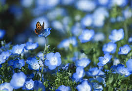 14 spring flowers and butterflies wallpaper amazing nature
