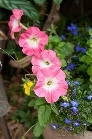 photos flower gardens greatindex net purple garden arafen