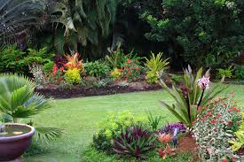 Tropical Backyard Designs Tropical Plants For Backyard Rolitz