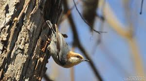 feeder friends a few birds you u0027ll want to meet the national