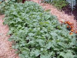 Garden Mulch Types - living breathing plants the best mulch of all u2014 veggie gardening tips