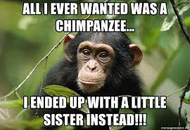 Chimp Meme - all i ever wanted was a chimpanzee i ended up with a little