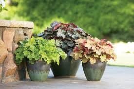 Potted Plants For Patio Shade Loving Container Plants Hgtv