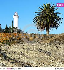 lighthouse and palm tree free stock photos images 6190102