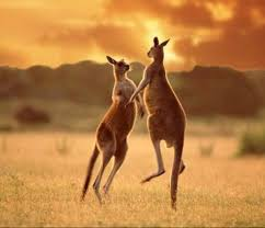 marsupials not from down under after all