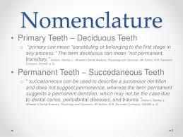 Wheeler S Dental Anatomy Physiology And Occlusion Dana Roseman Terminology