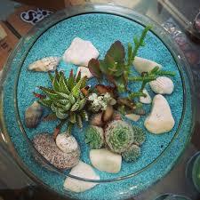 succulent terrariums cactus jungle