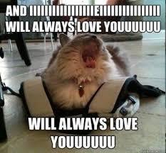 Hey I Love You Meme - diva cat meme guy