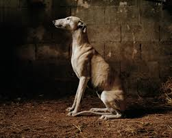 How Do You Say Living Room In Spanish by Restoring Dignity To Spain U0027s Mistreated Hunting Dogs U2013 Proof