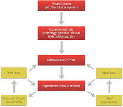 environmental factors in breast cancer invasion a mathematical