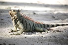 iguana island the palm island resort by elite island resorts experiences by
