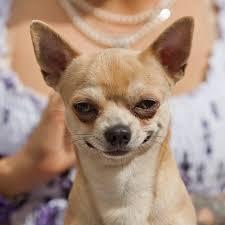 Smiling Dog Meme - smiling dog face meme generator