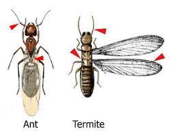 Winged Termites In Bathroom Frequently Asked Questions About Subterranean Termite Control
