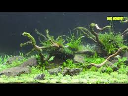 Aquascape Design Layout Aquascape With Takashi Amano Aquarium Layout Creation Youtube