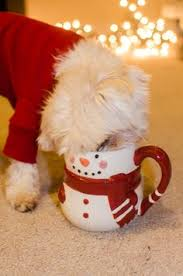 cute dog christmas card gift ideas pinterest dog holidays