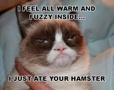 Grumpy Cat Memes Christmas - grumpy cat quickmeme 盪 quotes funny random pinterest