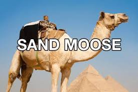 Camel Meme - camel better names for things know your meme