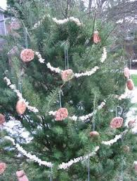 Edible Christmas Tree Decorations For Birds by Edible U0027 Christmas Tree For Wildlife In Your Backyard Wild