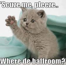 Cute Kitty Meme - kitten adoption archives austin lost and found pets