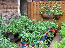 gorgeous patio vegetable garden containers gardening idea