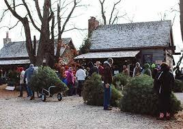 christmas tree u cut home design ideas