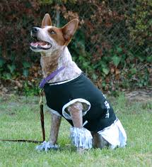 halloween dog shirts the dog geek october 2015