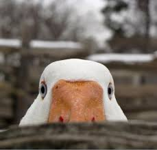 Goose Meme - create meme goose scout goose scout meme goose goose