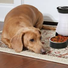 Which State Has The Most Dog Owners Per Capita According To 2016 Stats Pet Food The Good The Bad And The Healthy Petsafe Articles