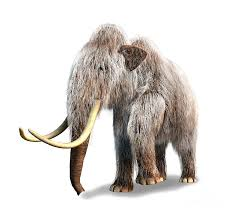 woolly mammoth white background digital art mammoth