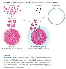 Serum Hpv hpv vaccines for cancer prevention the lasker foundation