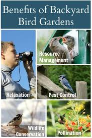 5 benefits of backyard bird gardens wisconsin homemaker