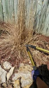 garden bite archive cutting back ornamental grasses