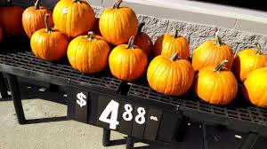 pumpkins for sale more of the pumpkins for sale at henrietta walmart of
