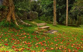 forest afternoon walk bench leaves green forest wallpapers free