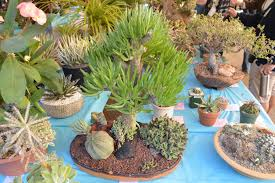 plants native to san diego san diego cactus and succulent society sdcss winter show u0026 sale