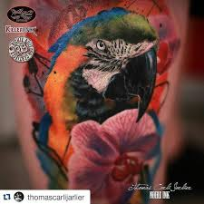 the 25 best parrot tattoo ideas on pinterest coloured pencil