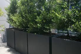 plants mesmerizing rectangular flower pots walmart paulownia