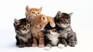 what is sad cat diary sad cat diary