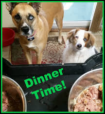 feeding a boxer dog common boxer dog health problems and easy solutions to keep your