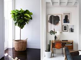 dream nesting fiddle leaf fig fiddle leaf and fig tree