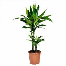 indoor plants singapore instructive tall indoor plants uncategorized artificial in trendy