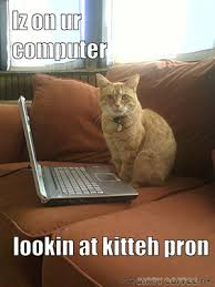Cat Laptop Meme - dirty coffee cream and sugar funny pictures web humor meme pics