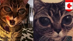 Cat Instagram Alien U0027 Cat Instagram Star Suffers From Genetic Eye Disorder