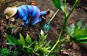 Urban Garden Denver - food gardens a growing trend u2013 the denver post