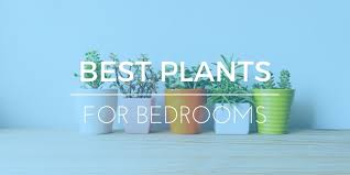 Best Plants For Bedroom Best Bedroom Plants 5 Best Artificial And Minimal Care Plants